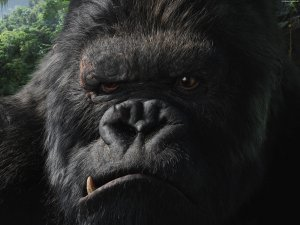 An image from King Kong